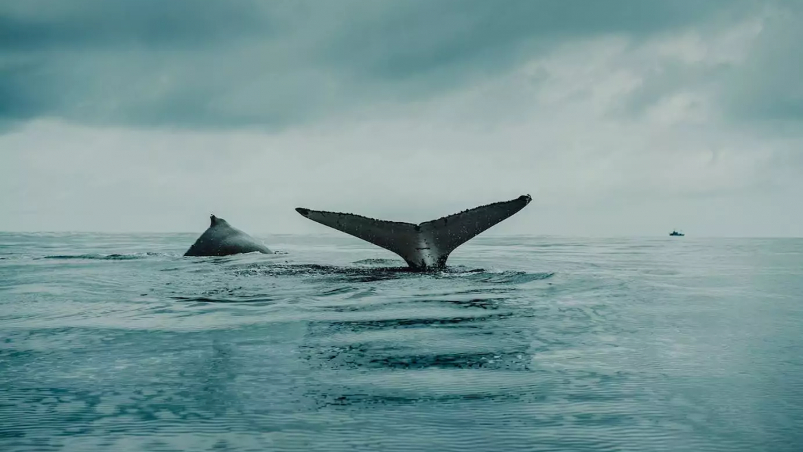 In short: the number of Bitcoin whales reaches a new high. Binance adds fiat currencies from Colombia and Peru