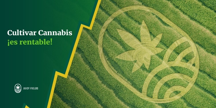 The JuicyFields platform increases your money for legally growing cannabis