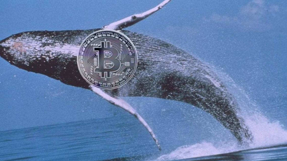 Can Bitcoin whales predict the price?